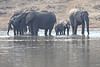Elephants_at_River_Kaingo_Zambia0025