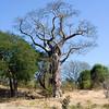baobab_big.jpg