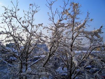 Miramarska zima 2005