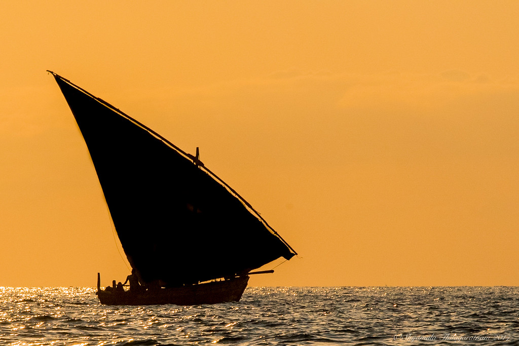 Dhows in the sunset are alive and well