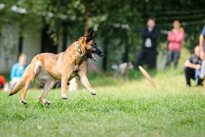 """Dogfrisbee - pracovní název: """"No teda Václave"""""""