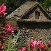 Pompeii pink flowers