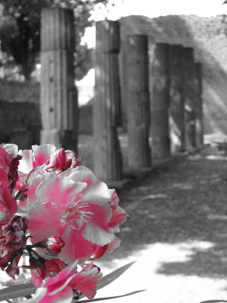 Pompeii B & W pink flowers