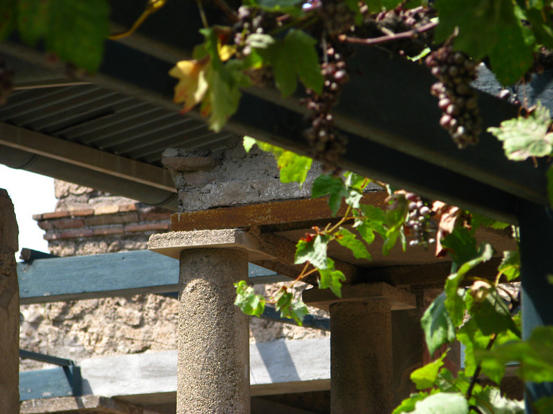 Pompeii grape vines