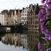 Row house reflection with purple flowers