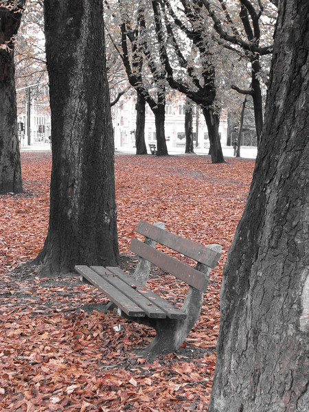 B & W bench with fall leaves