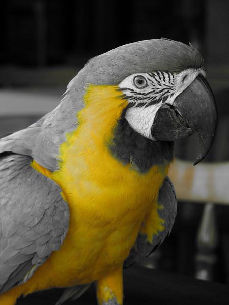 Macaw 01