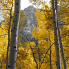 Aspens in fall 05