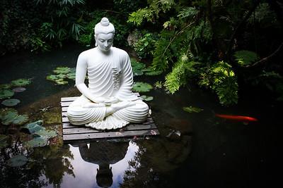 Attractive Zen Collection