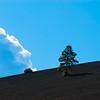 Lone Tree on Lava