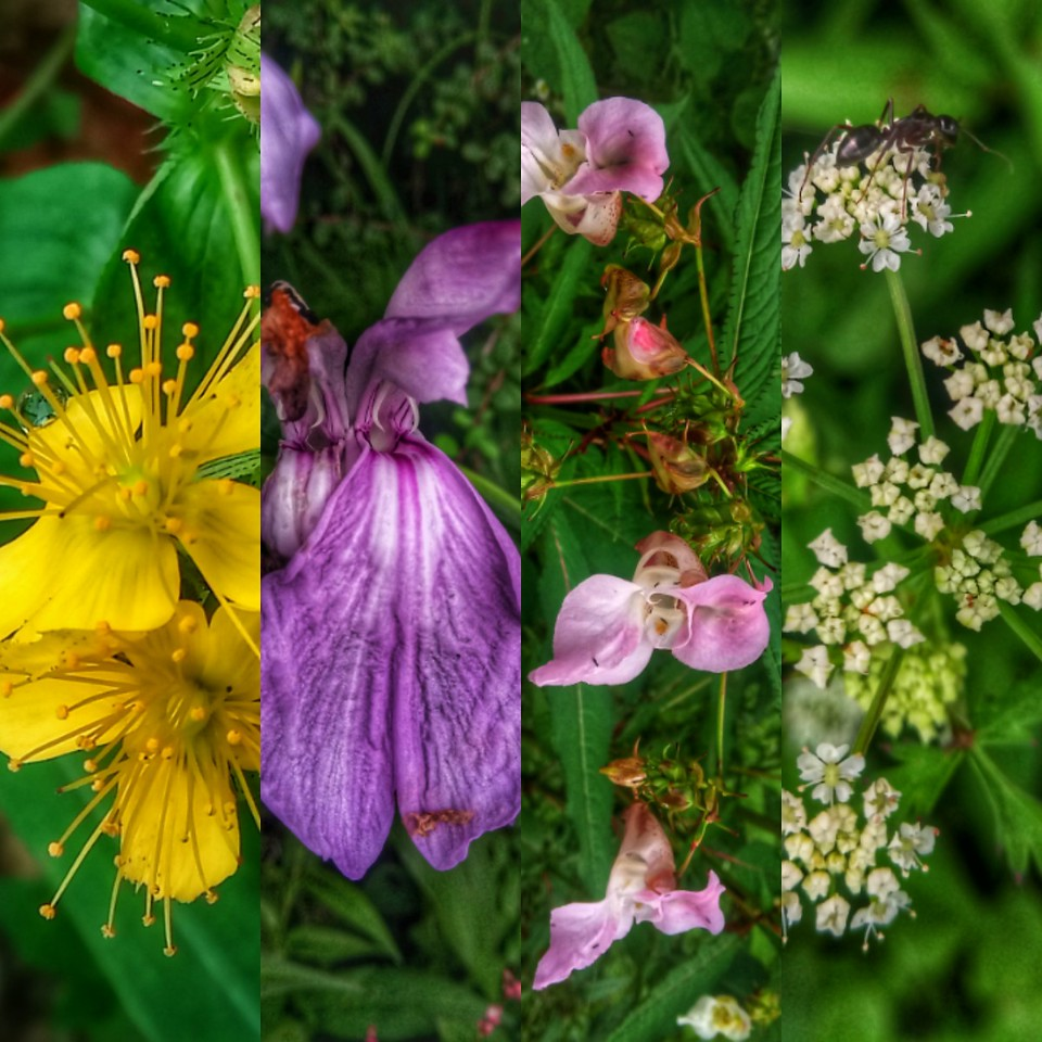 The colourful flowers in the Garhwal Himalayas of Uttarakhand