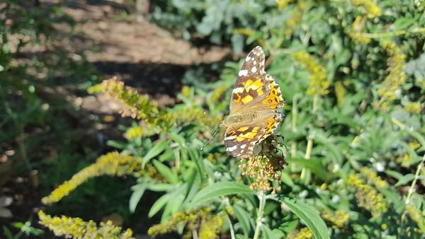 Butterflies in October