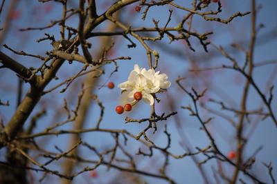 NJ Blooming trees November 2017
