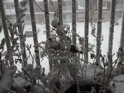 Snow Storm Jan 2016