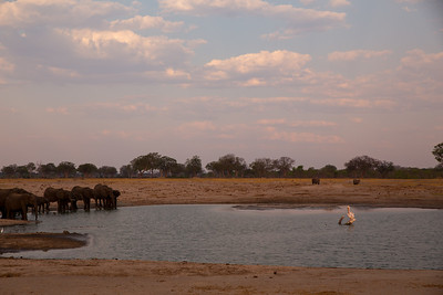 The pans of Hwange during dry season