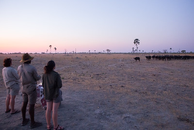 The herd wants in on the sundowners, Hwange