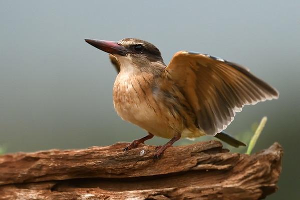 Mkhombe Birds Hide