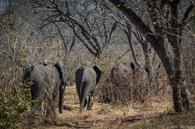Elephant family blending into the bush.