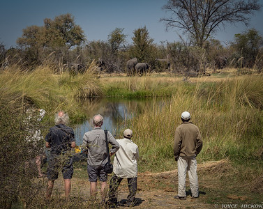Watching Elephants from Camp Site