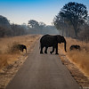 Elephants-no fences on the reserves.