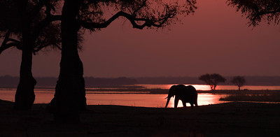 Zambezi sunset, Mana Pools National Park