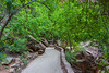 """Riverside Walk #1, Zion Canyon"""