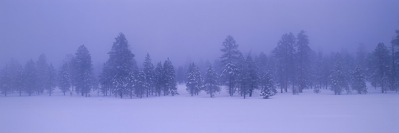 """""""Cold Winter Morning"""""""