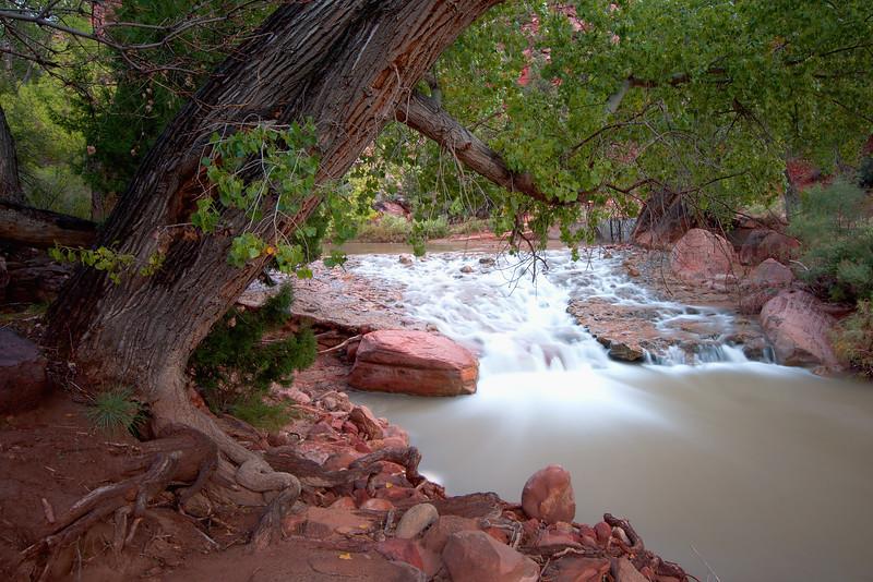 Stream Under Tree