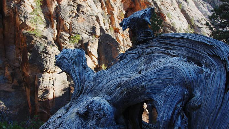 Zion National Park 2014