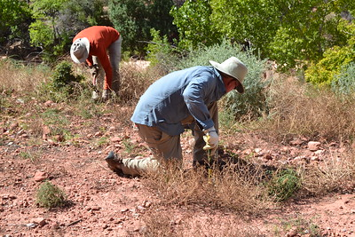 Wilderness Volunteers: 2015 Zion National Park Service Trip