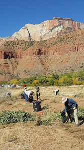 2017 Wilderness Volunteers Zion NP Service Trip