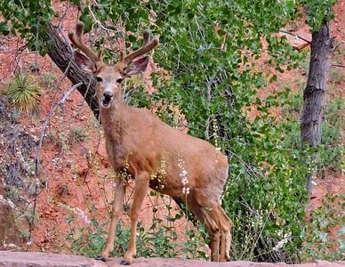 Mr Elk