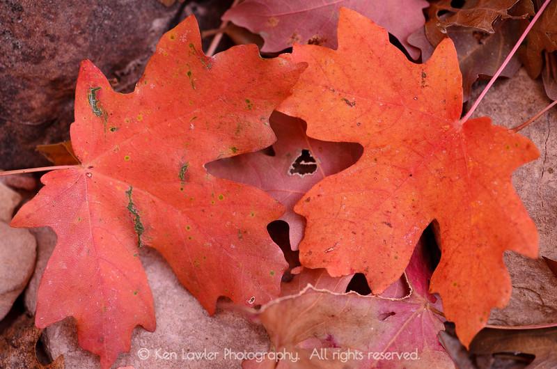 Red Autumn, Zion