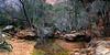 Upper Emerald Pool, Zion Natoinal Park