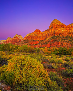 """Autumn Glow,"" Zion National Park"