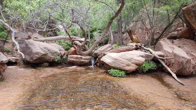 Medium Emerald Pools, Zion National Park