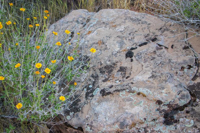 desert  flowers      sm       1