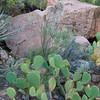 cactus      sm      9