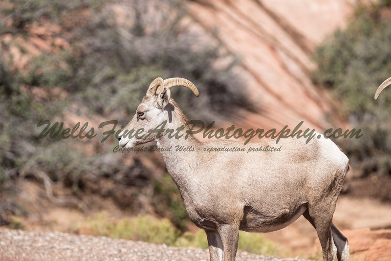 Ram profile