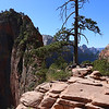 Scout's Lookout towards Angel's Landing