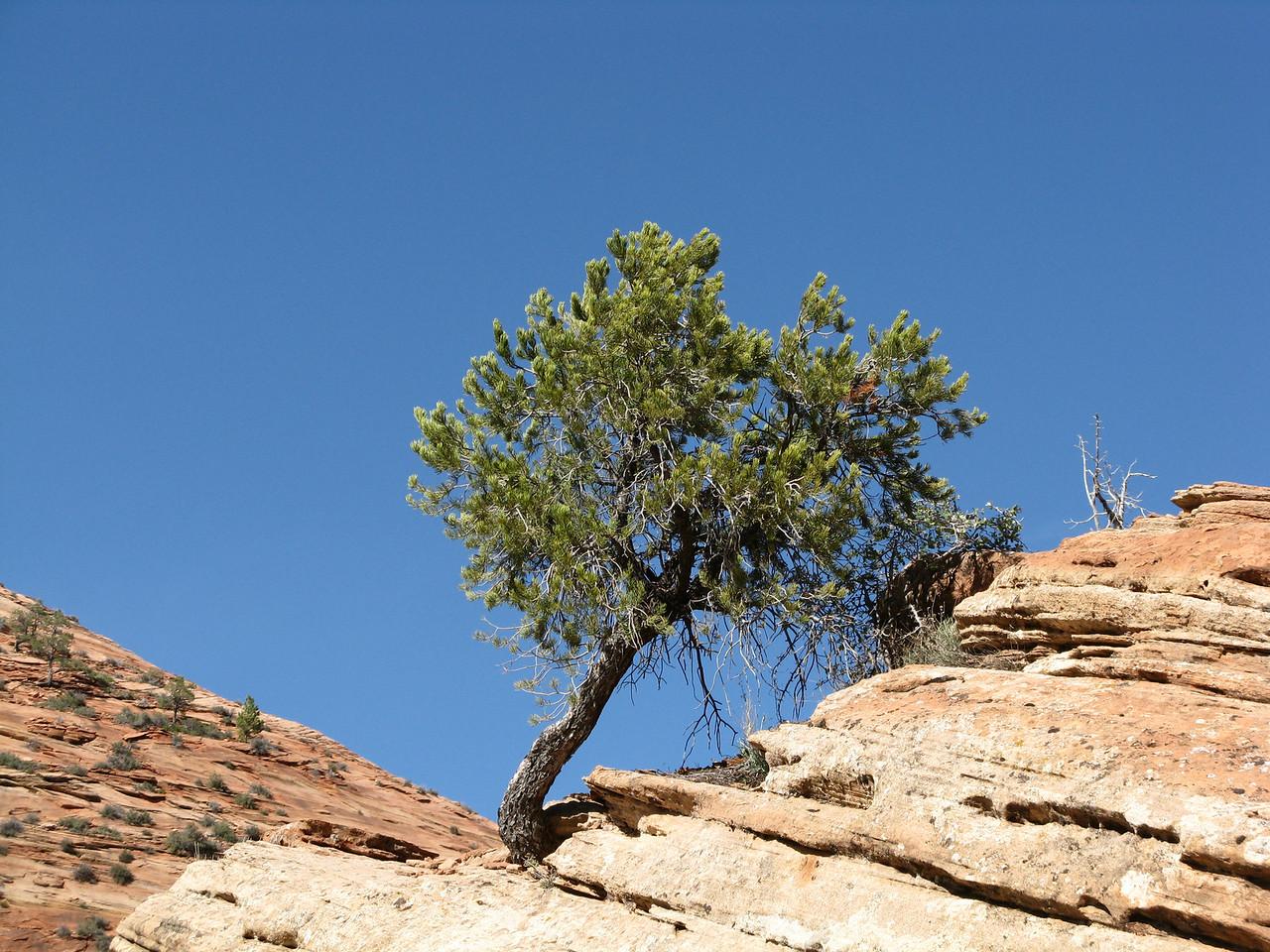 2011-04-21 Canyon Overlook 049