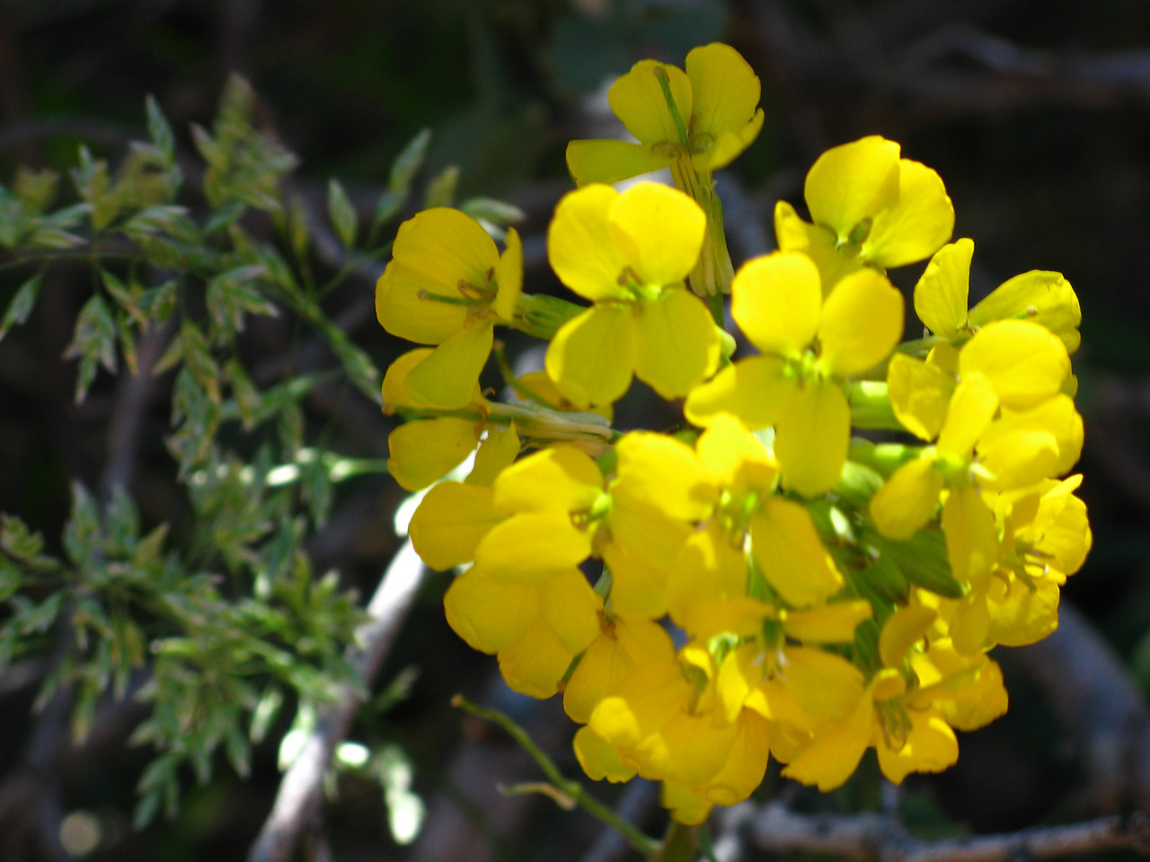 2011-04-21 Canyon Overlook 046