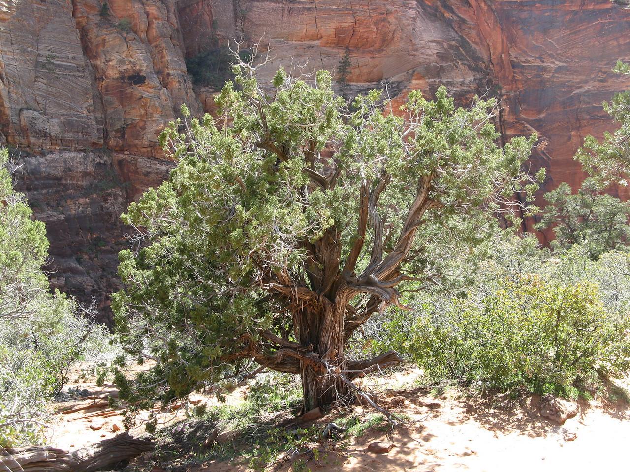 2011-04-21 Canyon Overlook 021