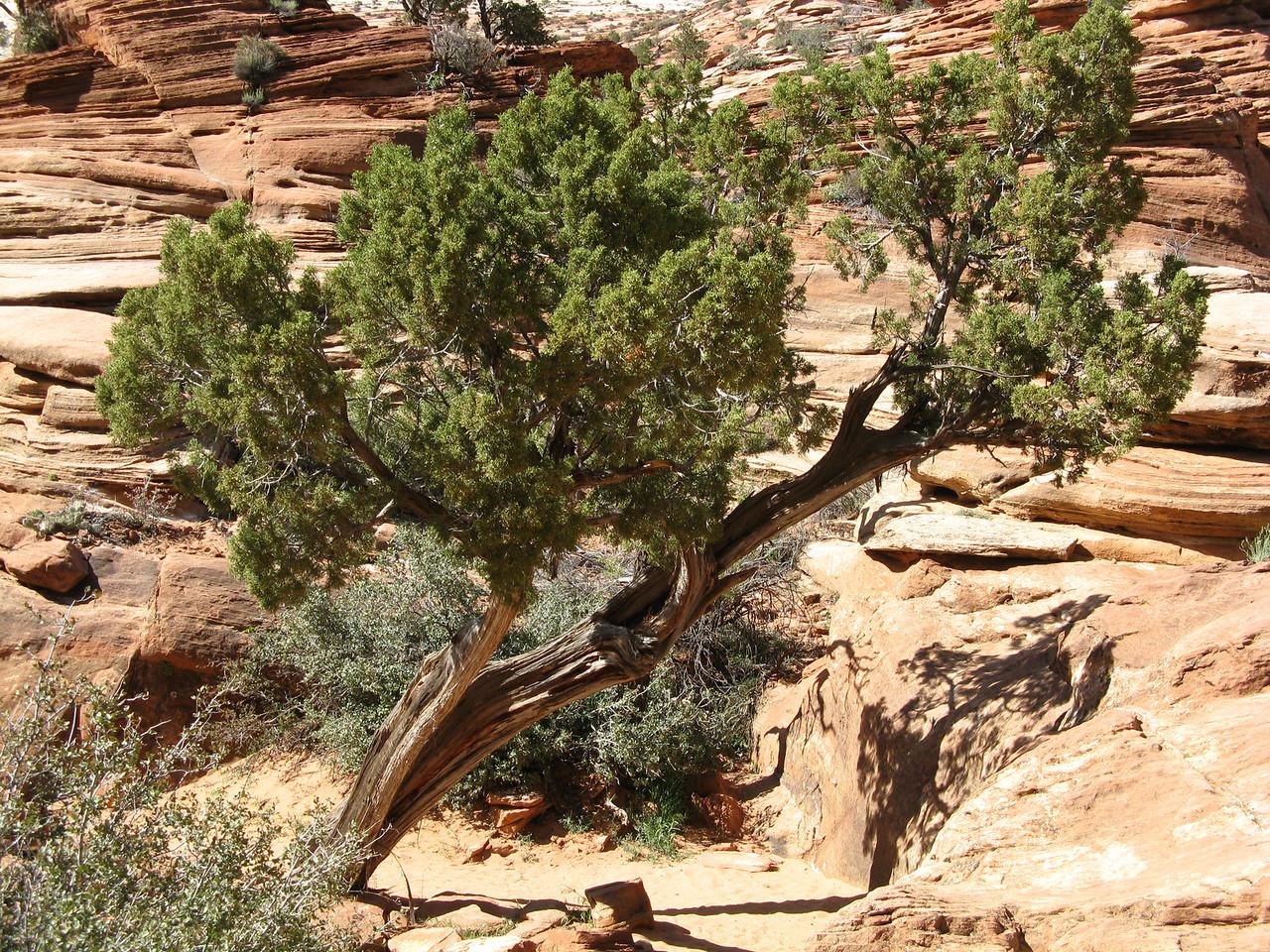2011-04-21 Canyon Overlook 024