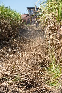 American Farm Bureau President Zippy Duvall gets close and personal of the next round of sugarcane harvest in St. Martin Parish.