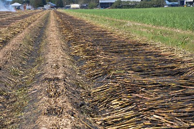 During his tour of Louisiana, American Farm Bureau President Zippy Duvall experience the burning of a sugarcane field. Once the rows of sugarcane are finished harvesting, sugarcane farmers burn the remaining stalks down.