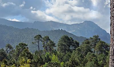 Pine Forest ; Sierra de Cazorla