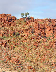 Eucalyptus ; Kimberley