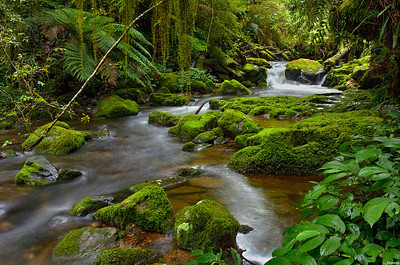 Stream ; Godwana Rainforest