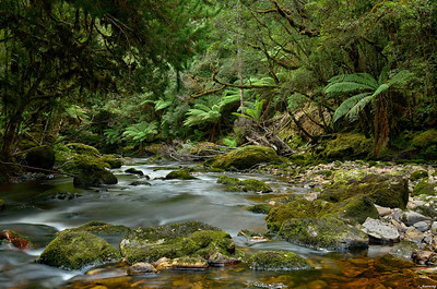 Tarkine; North West Tasmania